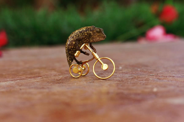 chameleon-bicycle
